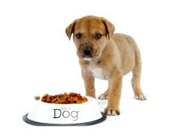Хвороби собак, їх лікування та профілактика