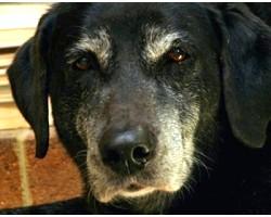 Хвороби старих собак і їх симптоми