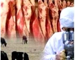 Чим можна заразитися через м'ясо