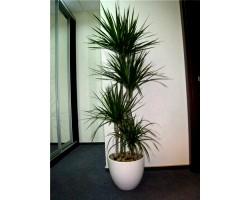 Декоративні рослини для будинку, квартири та офісу