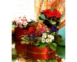 Угруповання кімнатних рослин