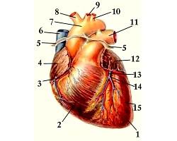 Інфекційні захворювання серця у дітей