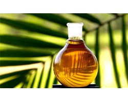Використання і лікувальні властивості пальмової олії