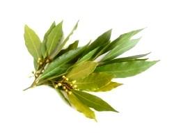 Ефірне масло з лаврового листа