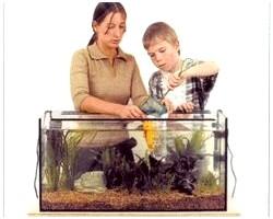Як правильно заселити рибок в акваріум