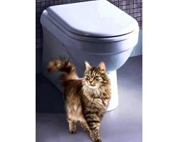 Як привчити кішку до унітазу?