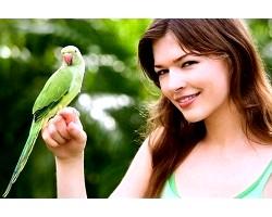 Як привчити папугу до рук?