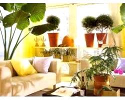 Як розмістити кімнатні рослини