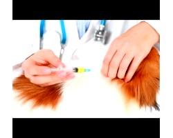 Коли робити щеплення собакам?