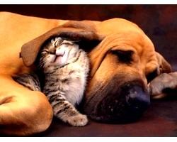 Кого вибрати - кота чи собаку?