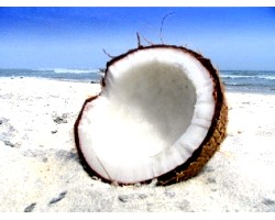 Кокосовий горіх: корисні властивості