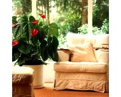 Кімнатні рослини для радості життя