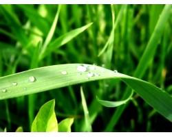 Лікувальна вода: божа роса