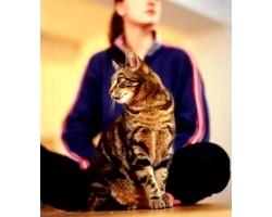 Лікування хвороби котячих подряпин народними засобами