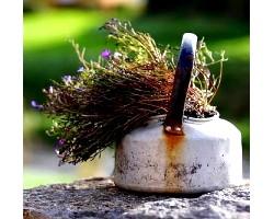 Лікарські рослини і способи їх застосування в народі