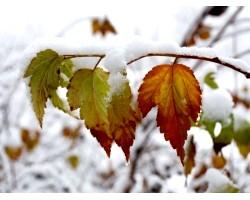 Народні прикмети про зиму