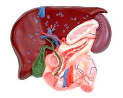 Народні рецепти лікування жовчнокам'яної хвороби