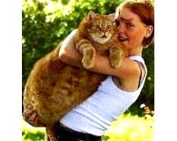 Ожиріння у кішок і собак, його ознаки та профілактика