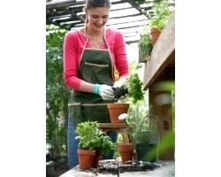 Пересадка кімнатних рослин, корисні поради