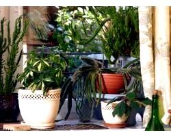Купівля кімнатних рослин
