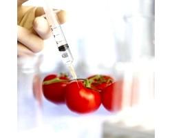 Користь і шкода генномодифікованих продуктів