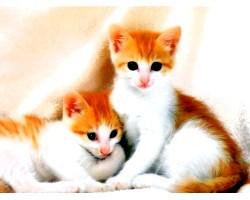 Поведінка домашніх кішок