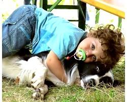 Прояв агресії собаки до дитини