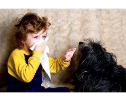 Собаки, які викликають алергію у дитини