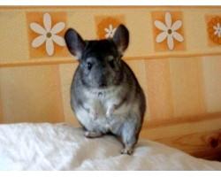 Зміст домашніх тварин у житлових приміщеннях
