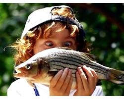 Склад і харчова цінність риби і рибопродуктів