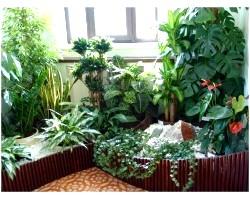 Складання композиції з кімнатних рослин