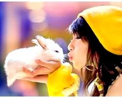 Догляд та утримання декоративного кролика
