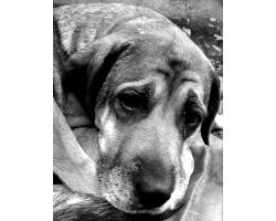 Догляд за старою собакою