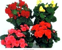 Вибираємо кімнатні квіти за знаками Зодіаку